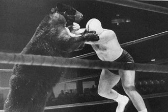 bear-fight-man