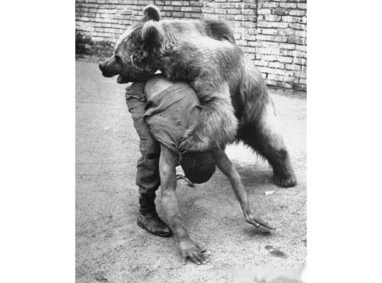 05-bear-boxer-iran
